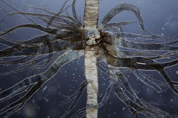 trachea-tree