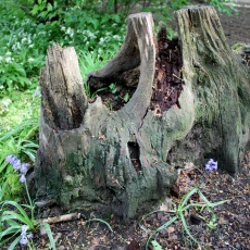 perry-wood-06-crop