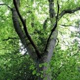 perry-wood-16-crop